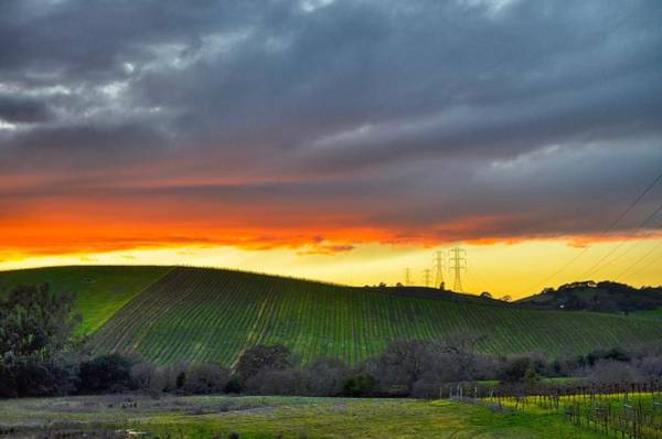 Napa Sunrise Art Print