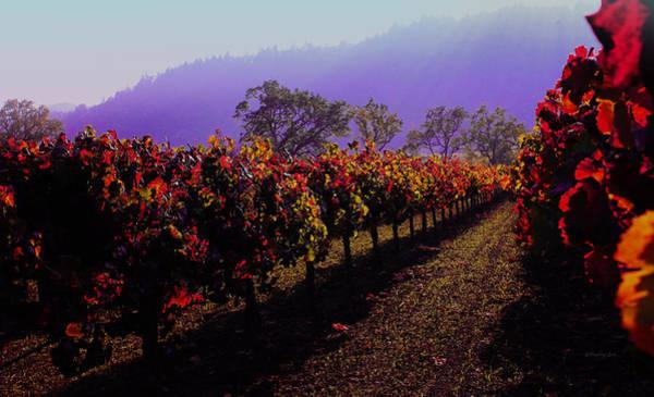 Photograph - Napa Valley California 2 by Xueling Zou