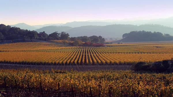 Photograph - Napa Valley California 3 by Xueling Zou