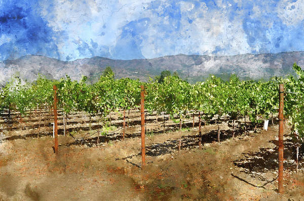 Photograph - Napa Valley California Vineyard Travel Destination by Brandon Bourdages