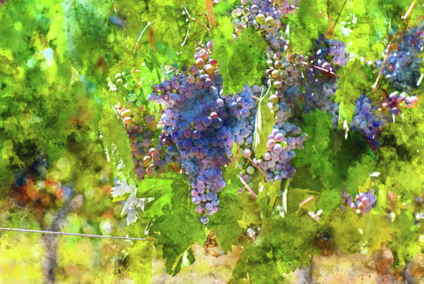 Photograph - Napa Valley Grapes On The Vine by Brandon Bourdages
