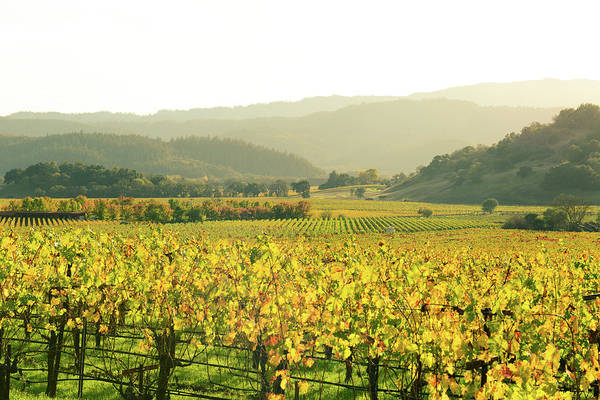 Photograph - Napa Valley In Autumn by Brandon Bourdages