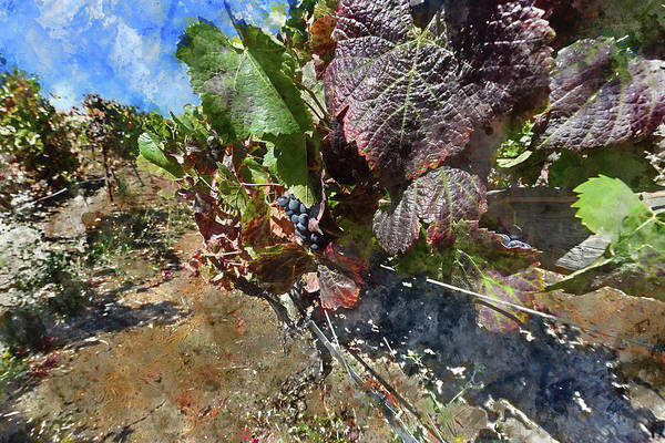 Photograph - Napa Valley Leaves In The Vineyard by Brandon Bourdages
