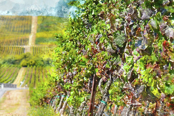 Photograph - Napa Valley Vineyard In Northern California by Brandon Bourdages