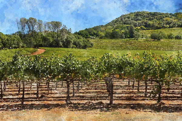Photograph - Napa Valley Vineyard On A Nice  Day by Brandon Bourdages