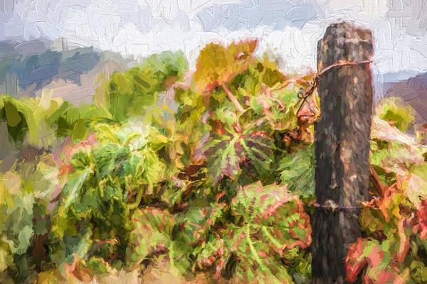 Painting - Napa Vineyard by David Letts