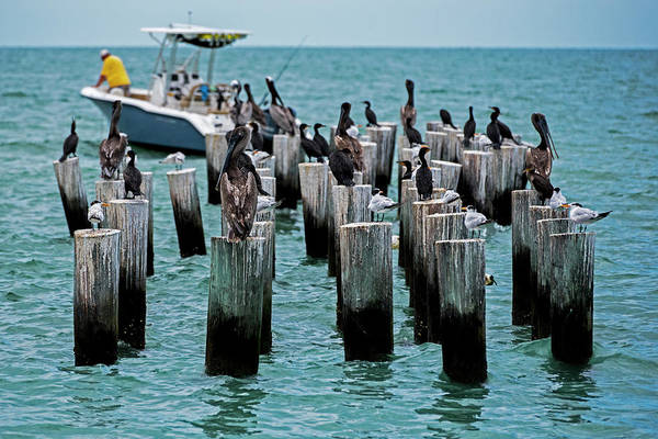 Photograph - Naples Beach Pilons Gathering Of The Birds Naple Fl by Toby McGuire