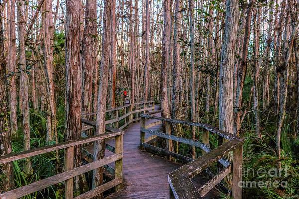Bromelia Photograph - Naples-corkscrew Swamp Bordwalk by Claudia M Photography