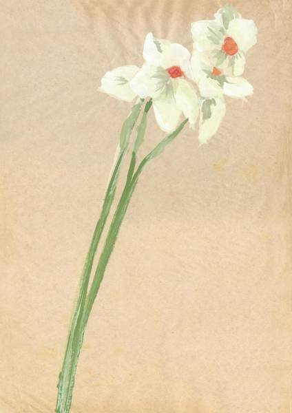 Guache Painting - Narcissi Study 4 by Sally Taylor
