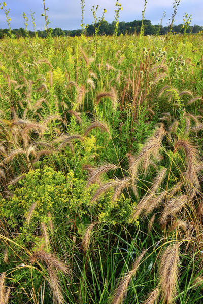 Photograph - Native Grasses In Glacial Park by Ray Mathis