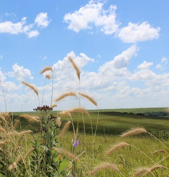 Wall Art - Photograph - Native Grasses by Weathered Wood