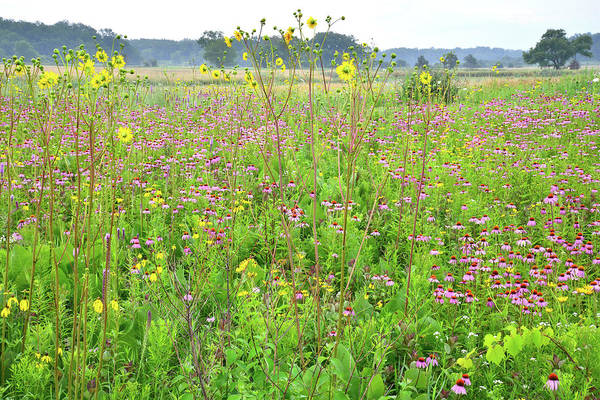 Photograph - Native Prairie In Chain-o-lakes Sp by Ray Mathis