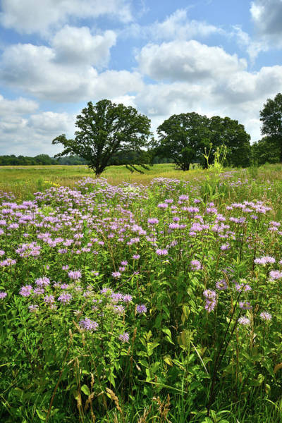 Photograph - Native Prairie In Mchenry County, Il by Ray Mathis
