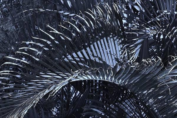 Palm Frond Digital Art - Moonlit Palm by John Hintz