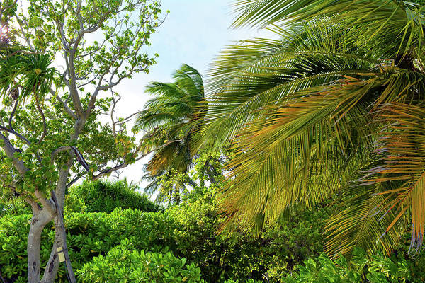 Photograph - Natural Background With Exotic Vegetation And Palm Trees by Oana Unciuleanu