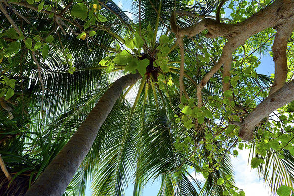 Photograph - Natural Background With Palm Tree by Oana Unciuleanu