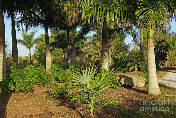 Wall Art - Photograph - Natural Beauty Of Florida by Zal Latzkovich