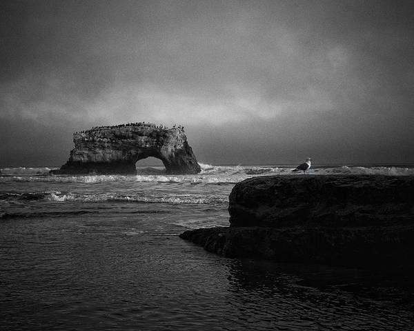 Photograph - Natural Bridge And The Gull by Lora Lee Chapman