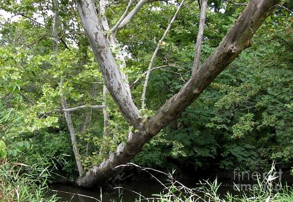 Photograph - Natural Bridge by Kathie Chicoine