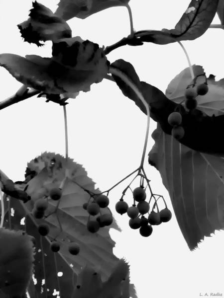 Photograph - Natural Composition by Lauren Radke