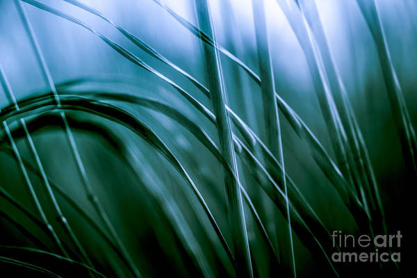 Photograph - Natural Forms At Oxbow Lake 1 by Michael Arend