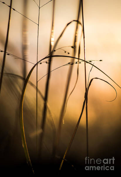 Photograph - Natural Forms At Oxbow Lake 3 by Michael Arend
