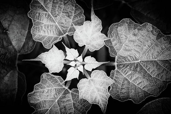 Photograph - Natural Fractal by Cate Franklyn