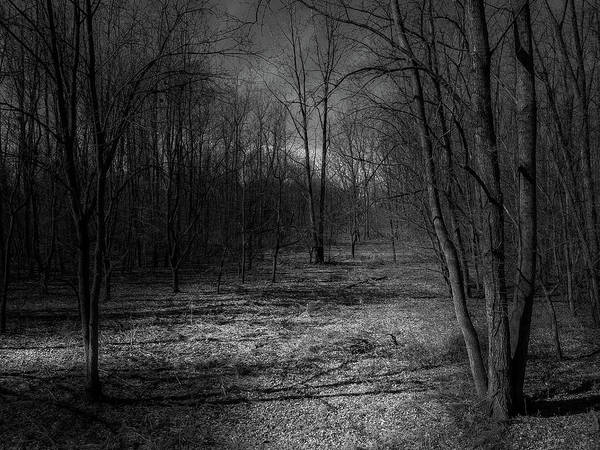 Photograph - Natural Path by Nick Smith