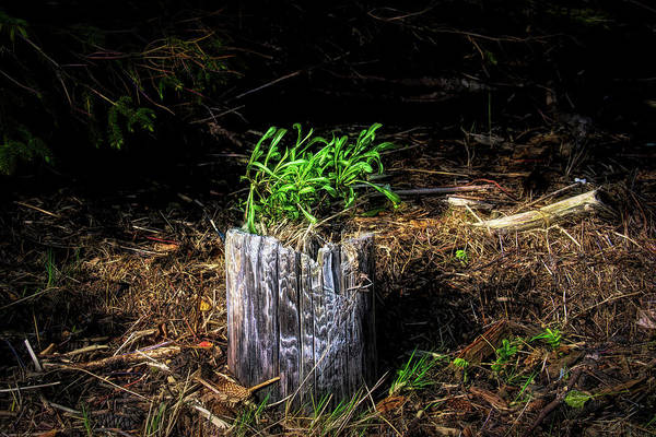 Photograph - Natural Planter by Bill Posner