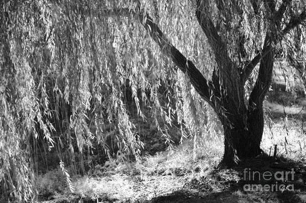 Photograph - Natural Screen by Gerlinde Keating - Galleria GK Keating Associates Inc