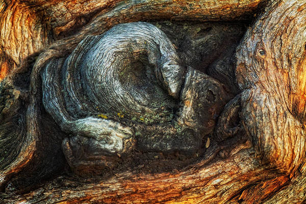 Photograph - Natural Twist by Bob Coates