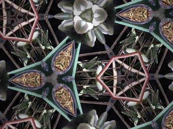 Photograph - Nature And Geometry by Sylvan Adams