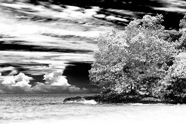 Photograph - Nature At Red Frog Beach Panama by John Rizzuto