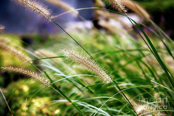 Photograph - Nature Background by Ariadna De Raadt
