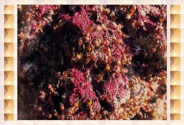 Ant Mixed Media - Nature Beautiful  Insect World  Ant Hill Hole Colony  by Navin Joshi