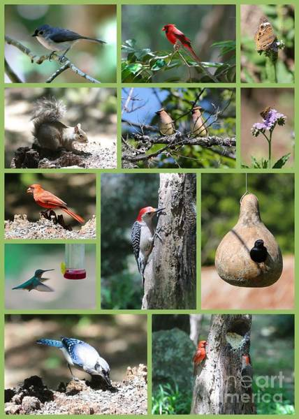 Photograph - Nature Collage by Carol Groenen