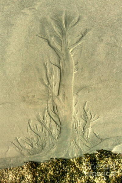 Wall Art - Photograph - Nature Designs In Sand by Myrna Bradshaw