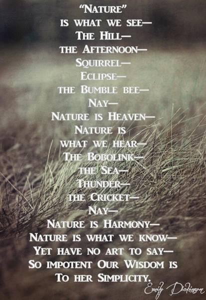 Photograph - Nature Emily Dickinson by Dan Sproul