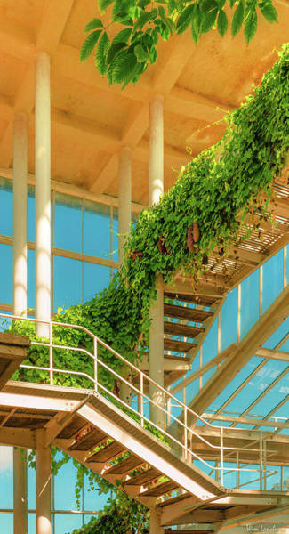 Conservatory Photograph - Nature Finds It's Way by Wim Lanclus