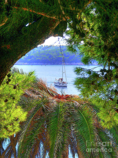 Photograph - Nature Framed Boat by Lance Sheridan-Peel
