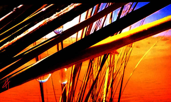 Photograph - Nature Harmony  by Colette V Hera  Guggenheim