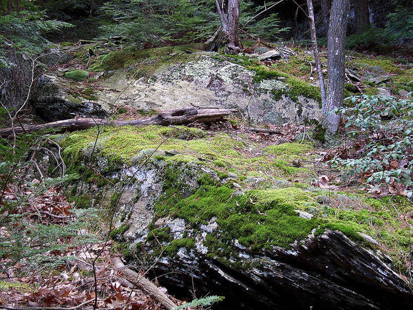 Kaaterskill Clove Photograph - Nature Has An Intimate Process In Raw Unwalked Places by Terrance DePietro