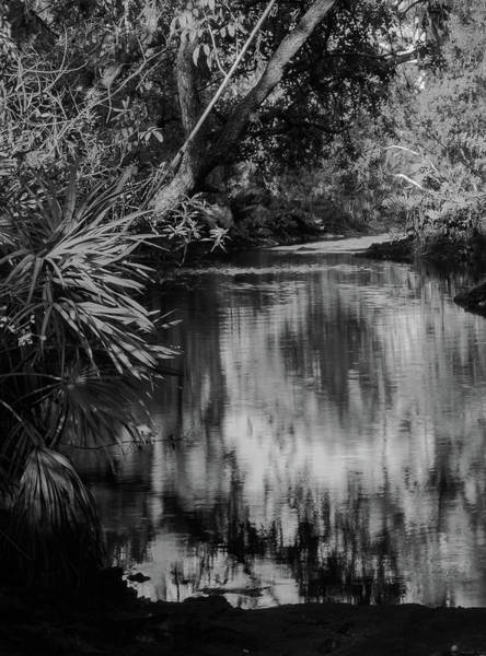 Photograph - Nature In Black And White by Vincent Billotto