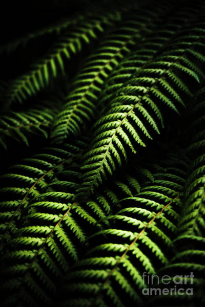 Rain Forest Photograph - Nature In Minimalism by Jorgo Photography - Wall Art Gallery