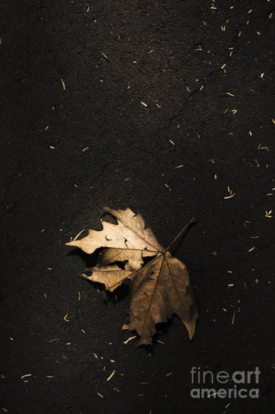 Photograph - Nature Maple Leaf Fine Art Photo. Fall Of Autumn by Jorgo Photography - Wall Art Gallery