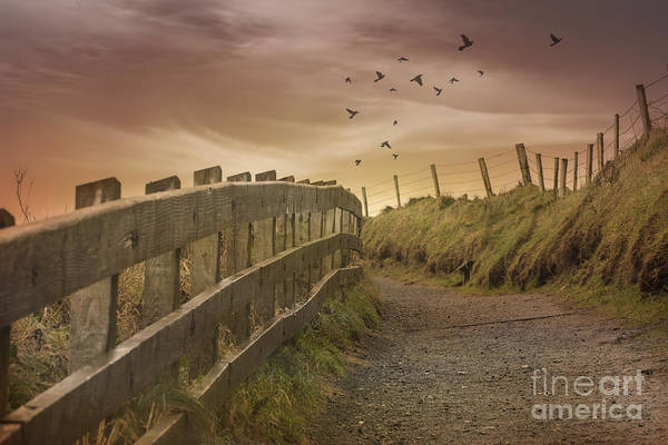 Barrier Photograph - Nature Path by Juli Scalzi