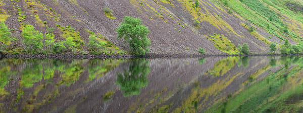 Wall Art - Photograph - Nature Reflection by Christian Heeb