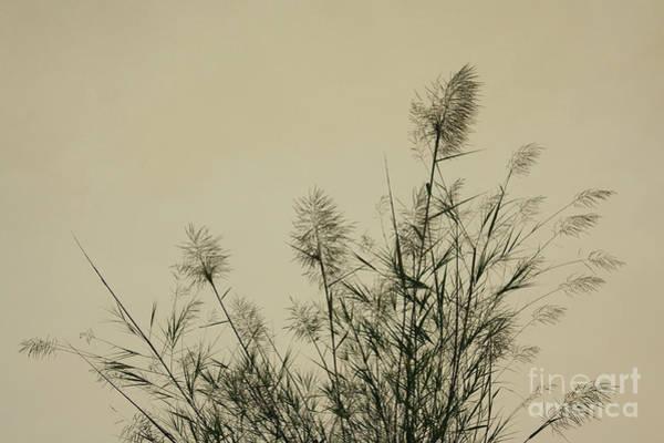 Wall Art - Photograph - Nature Scenery In Lijiang China by Julia Hiebaum
