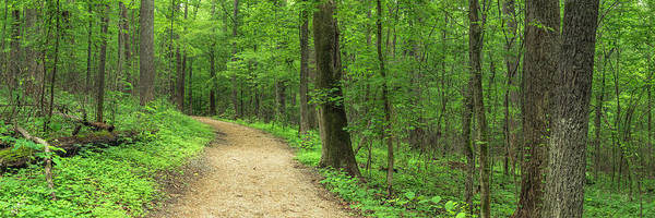 Photograph - Nature Trail In Charlotte North Carolina Panorama by Ranjay Mitra