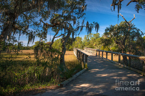 Photograph - Nature Trail Through Daniel Island Sc by Dale Powell